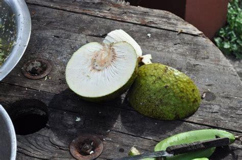 le fruit de l arbre 224 photo