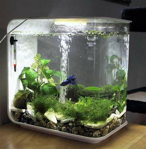 17 meilleures id 233 es 224 propos de petit aquarium sur aquarium maison aquarium