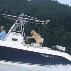 Boat Driving Dog by Funny Dog Gif Gifs Search Find Make Share Gfycat Gifs