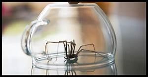Spinnen Fernhalten Wohnung : mit dieser pflanze bekommst du deine wohnung frei von spinnen ~ Whattoseeinmadrid.com Haus und Dekorationen