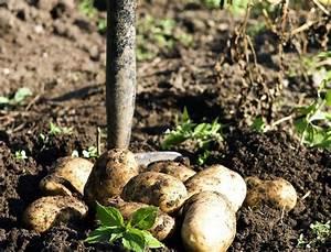 Kartoffeln Und Zwiebeln Lagern : gem se und kartoffeln frostfrei und frisch im garten lagern ~ Markanthonyermac.com Haus und Dekorationen