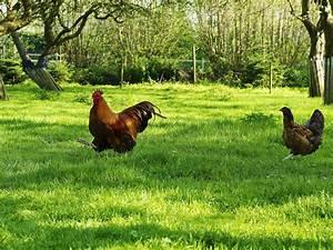 Hühner Im Garten : ferienhaus landlust pl ner see stocksee holsteinische schweiz herr hans j rgen sturies ~ Markanthonyermac.com Haus und Dekorationen