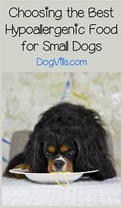 Best Hypoallergenic Dog Food for Small Breeds