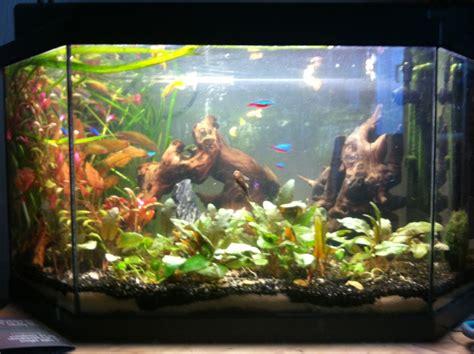 aquarium d eau douce tropicale 50l page 2