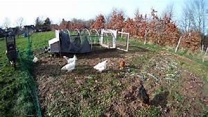 Hühner Im Garten : warum huehner keine schafe sind oder huehner sinnvoll im garten einsetzen video ~ Markanthonyermac.com Haus und Dekorationen