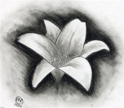 Charcoal Flower Drawing Easy Charcoal Sketches Of Flowers Interiors Inside Ideas Interiors design about Everything [magnanprojects.com]