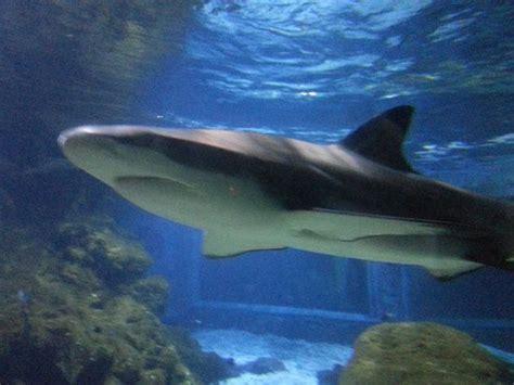 waou picture of aquarium du cap d agde cap d agde tripadvisor