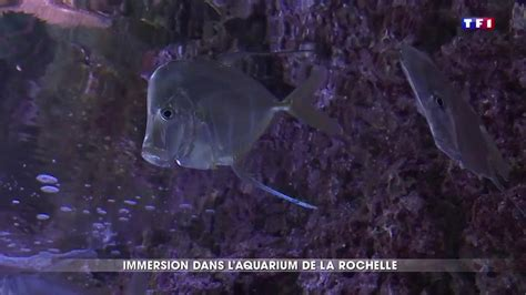 en immersion dans l aquarium de la rochelle l un des plus grands d europe lci