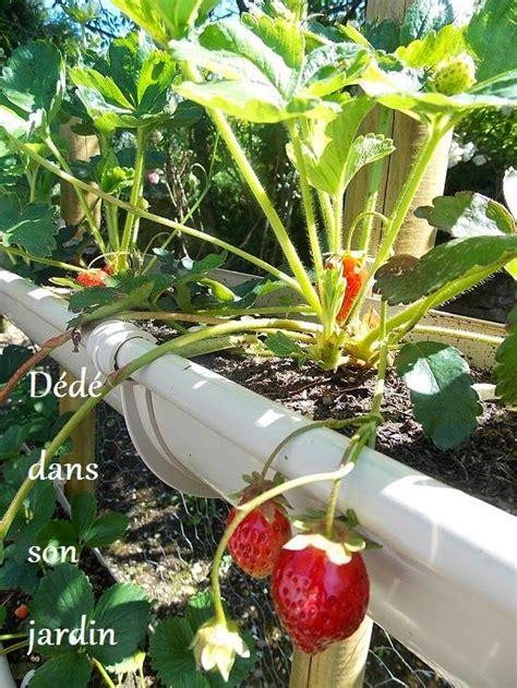 faire pousser des fraises en hauteur rue du jardin comment et tags