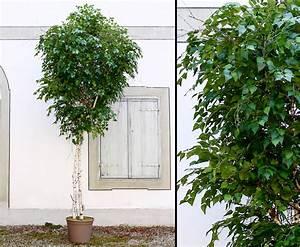 Große Zimmerpflanzen Günstig : gro e kunstpflanzen gro e kunstpflanzen g nstig kaufen ~ Markanthonyermac.com Haus und Dekorationen