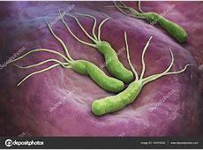 Helicobacter Pylori bacteria — Stock Photo © iLexx #143316243