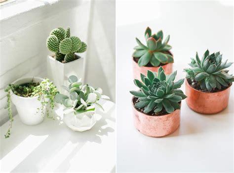 la succulente la plante grasse astuces d 233 co et conseil d entretien placer les succulentes