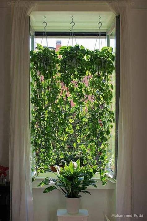 17 best ideas about pothos plant on kitchen plants golden pothos plant and golden