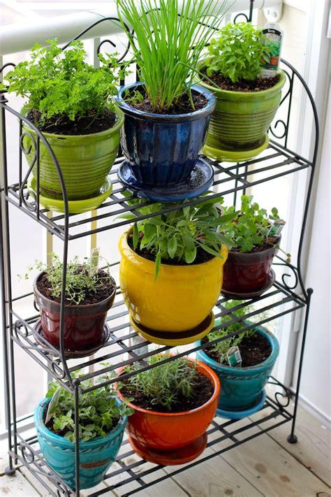 Tilia Botanicals  Overwintering Your Herbs Indoors