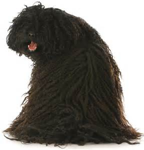 low shedding dogs list top 21 dogs that don t shed dogtime