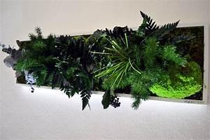 Pflanzen An Der Wand : wandschmuck konservierte pflanzen an der wand ohne pflegeaufwand ~ Markanthonyermac.com Haus und Dekorationen