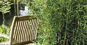 Immergrüner Sichtschutz Im Kübel : bambus d ngen mein sch ner garten ~ Whattoseeinmadrid.com Haus und Dekorationen