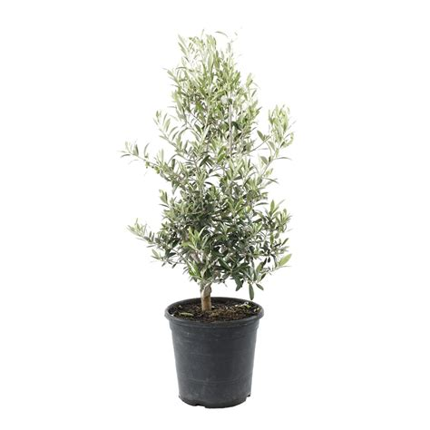 prix olivier pot