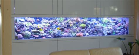 am 233 nagement aquarium eau de mer sur mesure