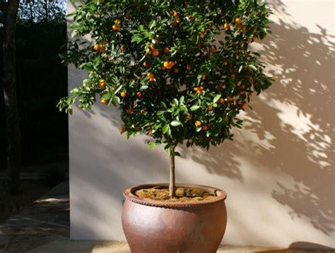 cl 233 mentinier et mandarinier