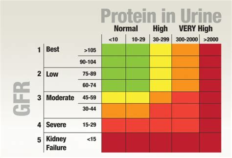 17 best images about protein in urine on devices signs and the colour