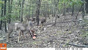 PA Trail Cam 2013 Bushnell Trophy Cam HD Max - YouTube