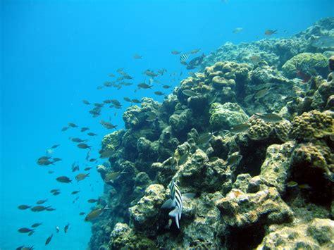 Catamaran Snorkeling Grand Cayman by Stingray City Grand Cayman Stingray City Sandbar