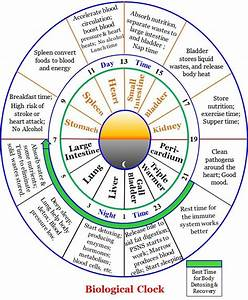 biological chinese body clock - Yahoo Image Search Results ...