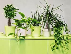 Pflanzen Für Wohnzimmer : luftreinigende pflanzen f rs b ro die top 9 f r besseres raumklima ~ Markanthonyermac.com Haus und Dekorationen