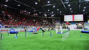 Agility / Dog Sports / Switzerland HD Stock Video Footage ...