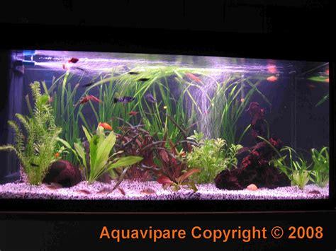 comment choisir neon pour aquarium