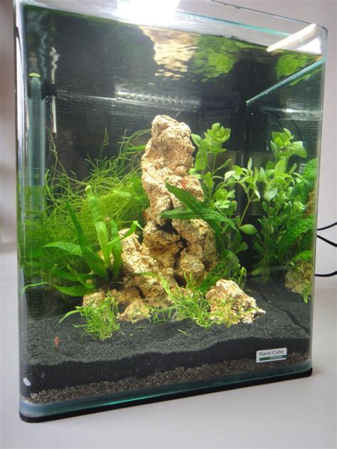 d 233 coration aquarium nano