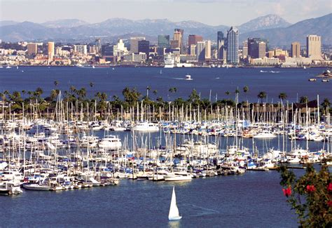 Whale Watching Boat Tours San Diego Ca by San Diego Harbor Cruises Boat Tours Whale Watching