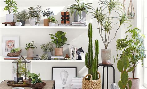 5 Indoor Hanging Planter Ideas