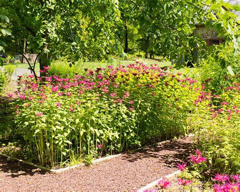 Garden Of Native Plants  Moland House
