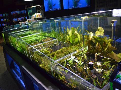 plantes aquatiques d aquarium animaux guide d achat fut 233