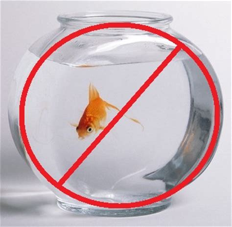 p 233 tition bocal interdit poisson une autre vie