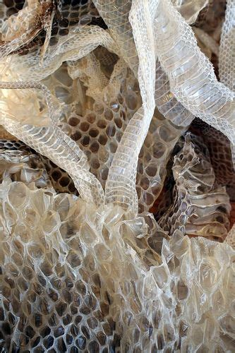 shed skins by recently reconfigured o matter snake skin patterns and estheticians
