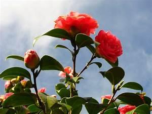 Pflanzen Bewässern Mit Plastikflasche : winterharte pflanzen den garten das ganze jahr lang sch n halten ~ Markanthonyermac.com Haus und Dekorationen