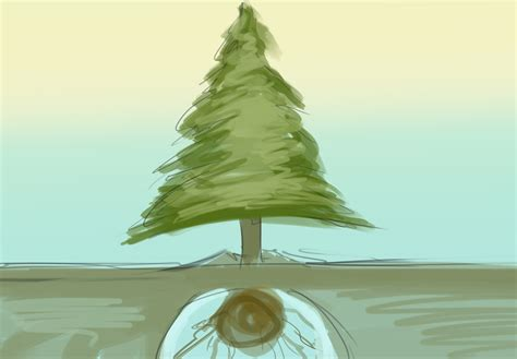 How To Plant A Living Christmas Tree