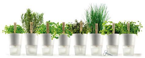 pot de fleurs avec r 233 serve d eau 216 11 cm verre 216 11 cm