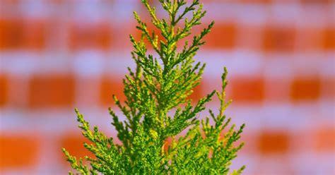 planter un arbuste en pot