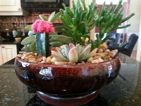 Indoor Cactus Garden  Great Outdoors  Pinterest