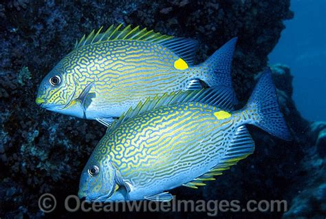51 Best Images About Aquatic  Saltwater Tropical On
