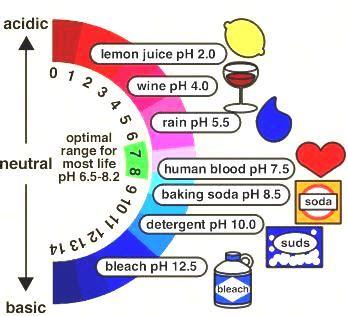 Acids And Bases  Tutorvista Blog