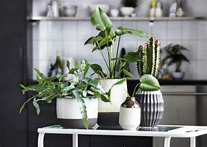 Pflanzen Die Wenig Licht Brauchen Heißen : sukkulenten pflegen vermehren arten sch ner wohnen ~ Markanthonyermac.com Haus und Dekorationen