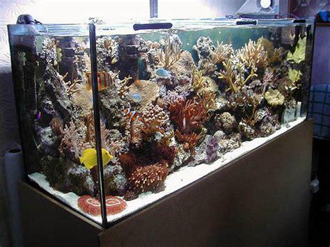 aquarium eau de mer 20 litres