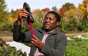 Washington State University Scholar Cornelius Adewlale to ...