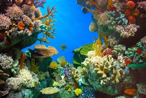aquarium de r 234 ve pour ses poissons pratique fr