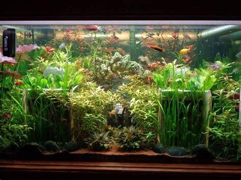 mon aquarium 1000 litres eau douce mon premier aquarium